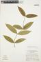 Tabernaemontana rupicola Benth., BRAZIL, G. T. Prance 14185, F