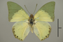 124999 Charaxes eupale d IN