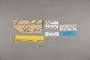 125082 Caligo brasiliensis sulanus labels IN