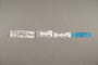 125089 Caligo euphorbus euphorbus labels IN