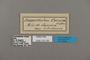 125109 Dasyophthalma creusa labels IN