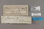 125121 Eryphanis reevesii labels IN