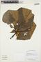 Sloanea L., GUYANA, K. M. Redden 1390, F