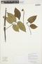 Paullinia fibulata Rich. ex Juss., GUYANA, K. J. Wurdack 5276, F
