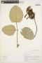 Erythrina fusca image