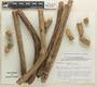 Bignonia hyacinthina (Standl.) L. G. Lohmann, PERU, E. Wade Davis 1322, F