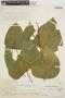 Erythrina poeppigiana image