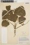 Erythrina velutina image