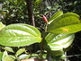 Rapid Inventory 26 live plant photo