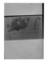 Field Museum photo negatives collection; Genève specimen of Cerastium consanguineum Wedd., BOLIVIA, G. Mandon 974, Syntype, G