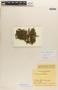 Mayaca fluviatilis Aubl., COLOMBIA, R. E. Schultes 19432, F