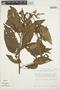 Chamissoa altissima (Jacq.) Kunth, PERU, T. C. Plowman 11556, F