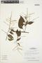 Chamissoa altissima (Jacq.) Kunth, BRAZIL, J. J. Strudwick 3289, F