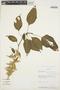 Chamissoa altissima (Jacq.) Kunth, Bolivia, J. C. Solomon 10544, F