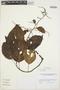 Chamissoa altissima (Jacq.) Kunth, VENEZUELA, L. J. Dorr 8742, F