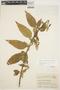 Chamissoa altissima (Jacq.) Kunth, COLOMBIA, J. Cuatrecasas 16326, F