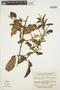 Chamissoa altissima (Jacq.) Kunth, VENEZUELA, J. A. Steyermark 101498, F