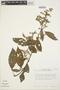 Chamissoa altissima (Jacq.) Kunth, PERU, T. C. Plowman 11555, F