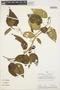 Chamissoa altissima (Jacq.) Kunth, PERU, Rod. Vásquez 753, F