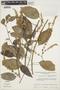 Chamissoa altissima (Jacq.) Kunth, VENEZUELA, T. Romero B. 334, F