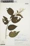 Chamissoa altissima (Jacq.) Kunth, ECUADOR, H. Balslev 10562, F