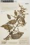 Chamissoa altissima var. rubella Suess., COLOMBIA, J. Cuatrecasas 20498, F