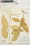 Chamissoa altissima var. rubella Suess., PERU, J. Schunke Vigo 4485, F