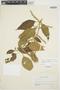Chamissoa altissima var. rubella Suess., ARGENTINA, H. H. Bartlett 20297, F