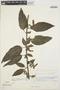 Chamissoa altissima var. rubella Suess., BOLIVIA, R. F. Steinbach 409, F