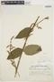 Chamissoa altissima var. rubella Suess., ARGENTINA, A. E. Ragonese 312, F