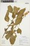 Amaranthus urceolatus image