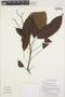 Rhodothyrsus macrophyllus (Ducke) Esser, GUYANA, K. M. Redden 5276, F