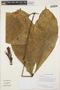 Paullinia cupana Kunth, GUYANA, H. D. Clarke 7517, F
