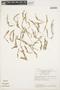 Mayaca fluviatilis Aubl., BRAZIL, T. Plowman et al. 8732, F
