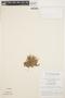 Mayaca fluviatilis Aubl., BRAZIL, G. T. Prance 6076, F