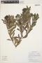Columellia oblonga Ruíz & Pav., Peru, M. Weigend 98/424, F