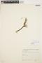 Mayaca longipes Mart. ex Seub., BRAZIL, M. Bastos 80, F