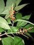 Rapid Inventory 24 live plant photo