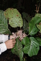 Rapid Inventory 25 live plant photo