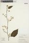 Chamissoa altissima (Jacq.) Kunth, ECUADOR, E. Schupp 70, F