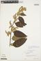 Chamissoa altissima (Jacq.) Kunth, VENEZUELA, L. C. M. Croizat 639, F