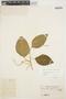 Chamissoa altissima (Jacq.) Kunth, VENEZUELA, Bro. Santiago 57, F