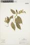 Chamissoa altissima (Jacq.) Kunth, PERU, R. B. Foster 8364, F