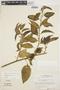 Chamissoa altissima (Jacq.) Kunth, SURINAME, H. S. Irwin 55423, F