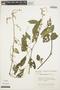 Chamissoa altissima (Jacq.) Kunth, VENEZUELA, P. E. Berry 1927, F