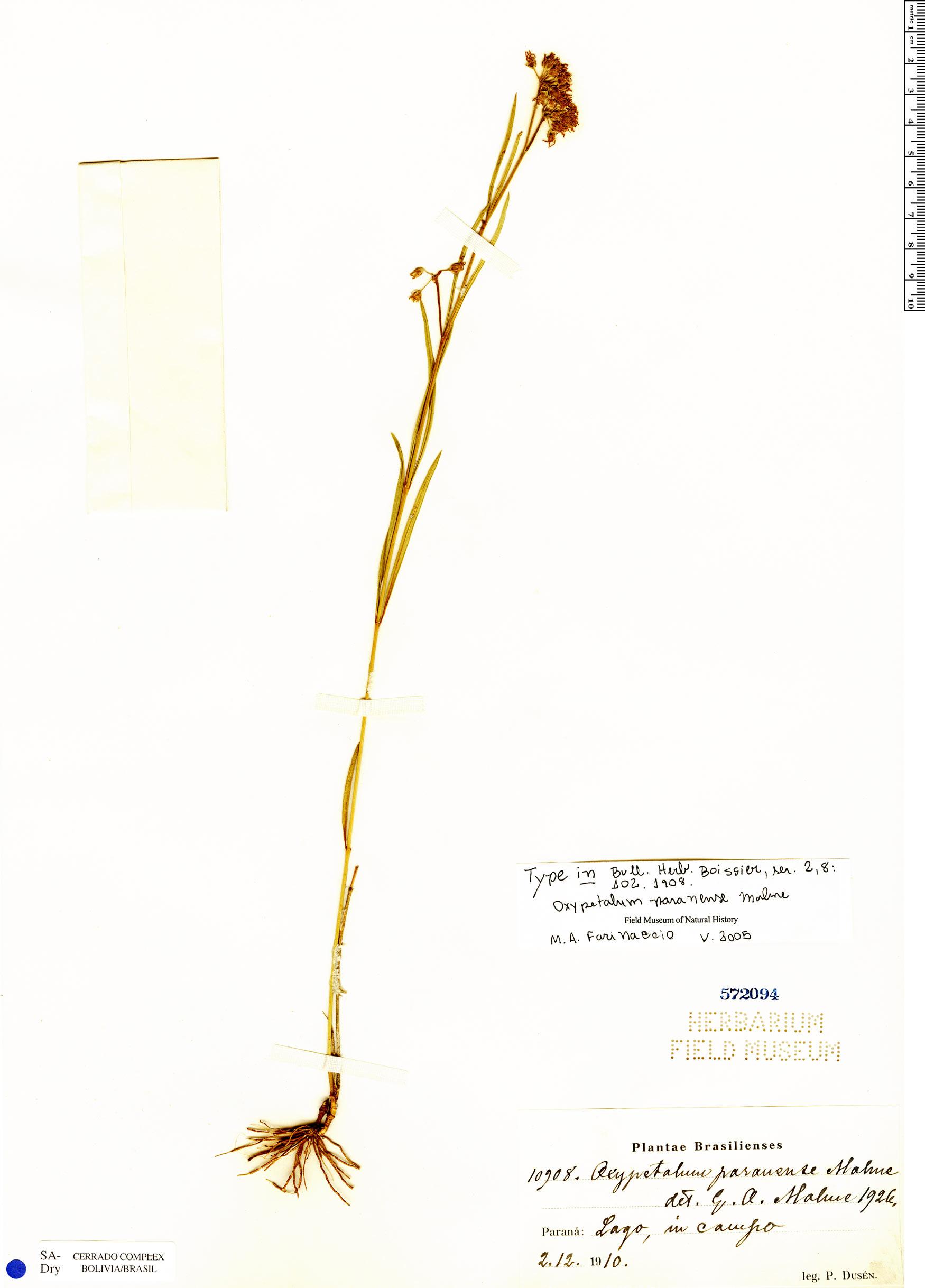 Specimen: Oxypetalum paranense