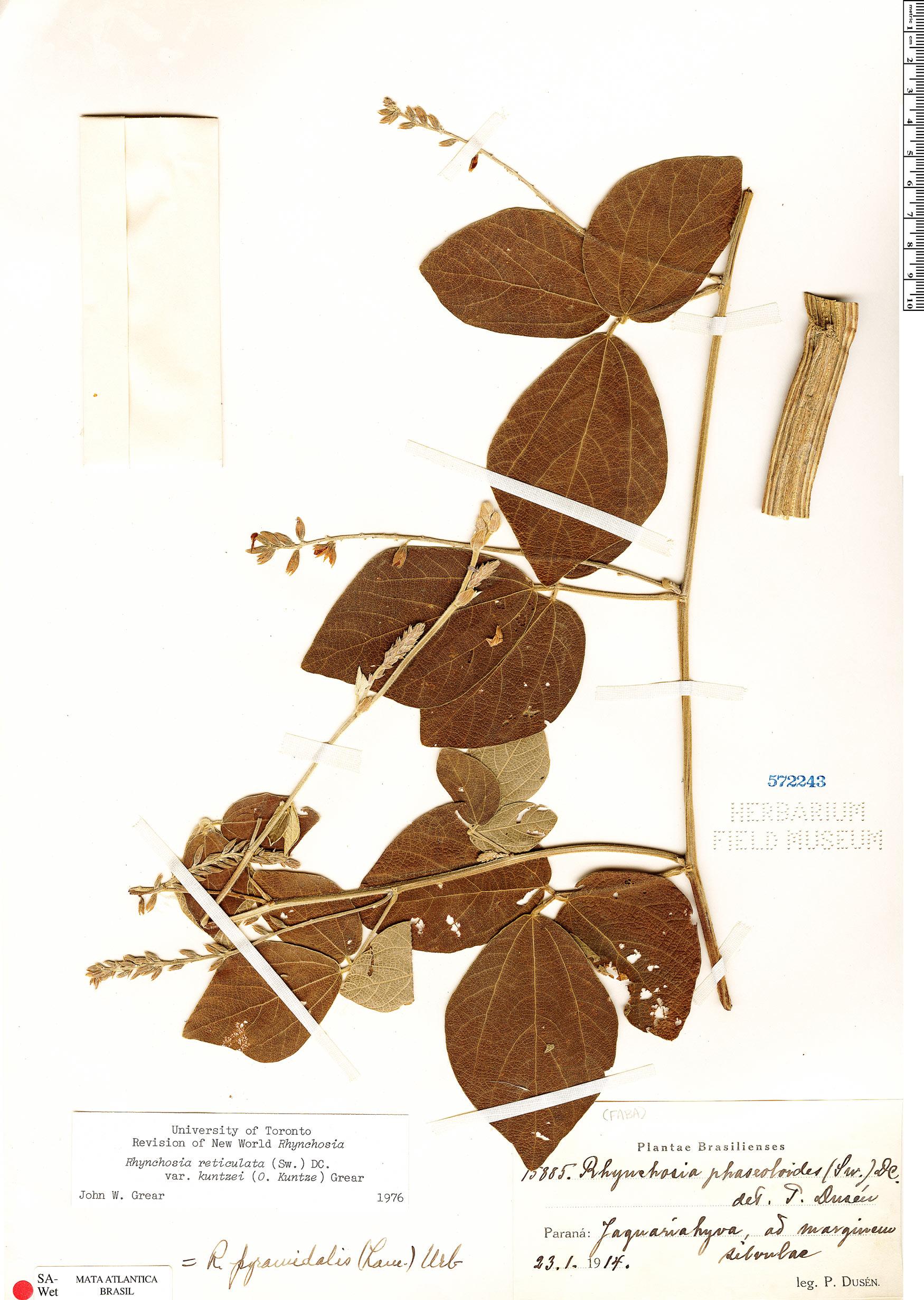 Espécimen: Rhynchosia reticulata