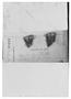 Azorella monantha image