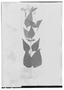 Field Museum photo negatives collection; Genève specimen of Eupatorium sieberianum DC., Trinidad and Tobago, F. W. Sieber 72, Type [status unknown], G