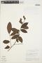Symplocos guianensis (Aubl.) Gürke, BRAZIL, G. T. Prance 10007, F